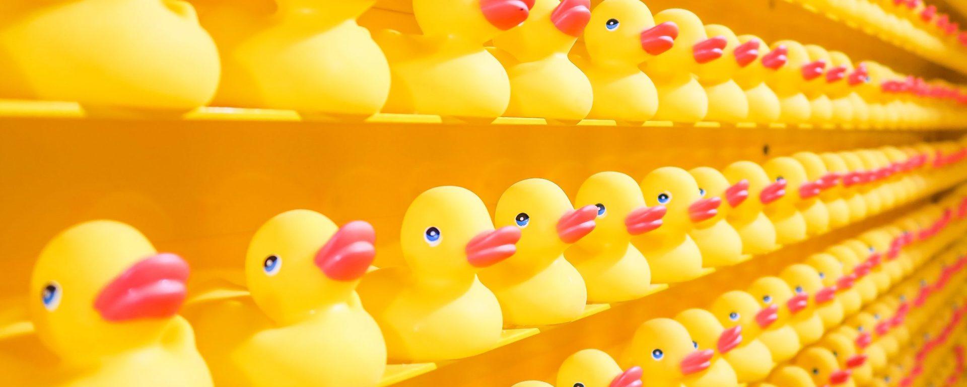 Ducks. Image: Joshua Colman on Unsplash