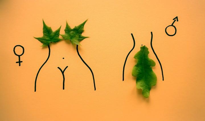 Female and male. Trans Women are not Men. Image Dainis Graveris on Unsplash